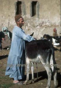 aaaaaaaaaaa - man and donkey Imbaba