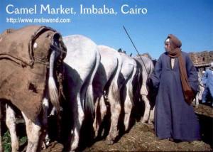 aaaaaaaaaaaa - man behind camels Imbaba