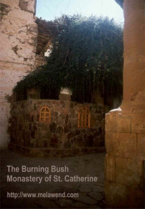 dddddd - burning bush in Monastery St. Catherine