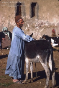 EGYPT - Camel Market_IMG_0010aaaaa