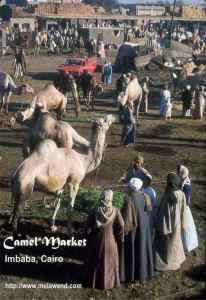 EGYPT - Camel_Market_-_Imbaba_Cairo_-_Melawend[1]