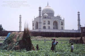 INDIA TAJ IMG_0226