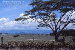 KENYA IMG_0242
