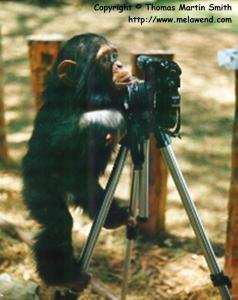 KENYA MT KENYA GAME RANCH Tom S monkeying around - again... Max in Kenya