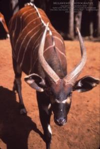 KENYA MT KENYA IMG_0224