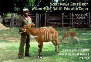 KENYA MT KENYA Nelson