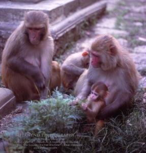 NEPAL IMG_0064aaaa