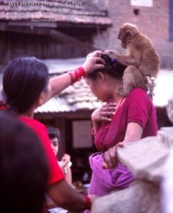 NEPAL IMG_0207