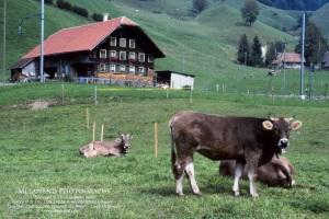 SWITZERLAND IMG_0004 (2)