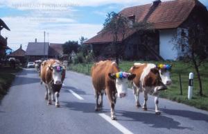 SWITZERLAND IMG_0113
